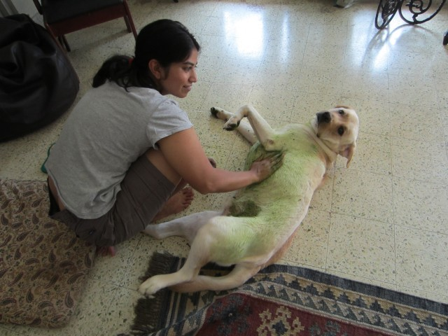 Canine Hot Spots and the Wonders of Neem | nonsense girl