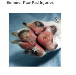 Dog First Aid Cut Paw Pad
