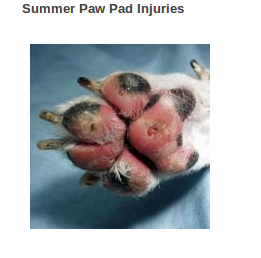 What To Do When A Dog Cuts Their Paw Pad