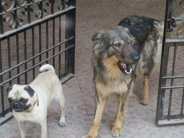Maggie and bozo