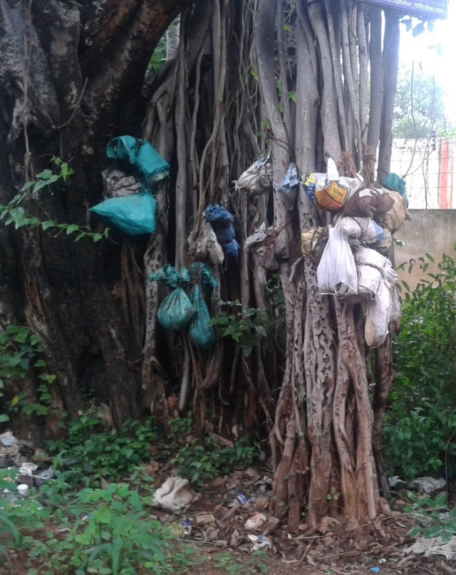 Banyan tree with offerings