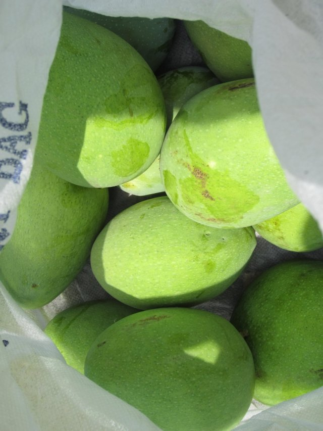 Mangoes from the garden