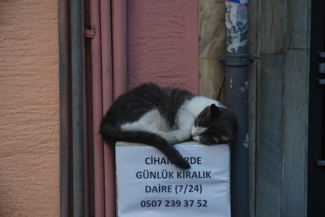 Cat sleeping: The sign says room available for rent 24/7 call: