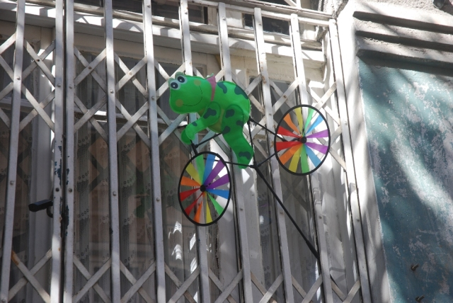 Window treatment: kermit on a bicycle, CIhangir