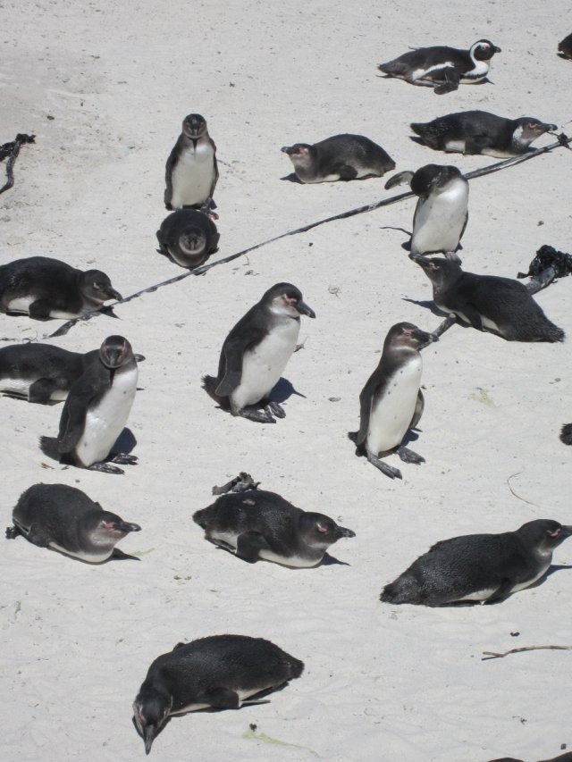 Penguins sunning themselves